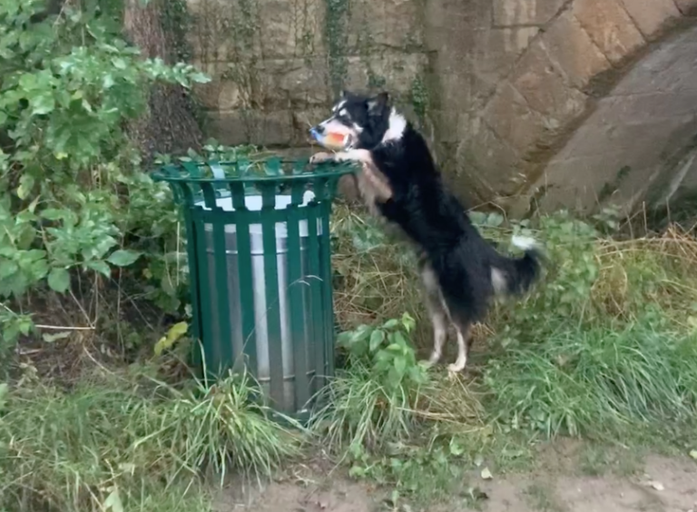 Litter picking dog